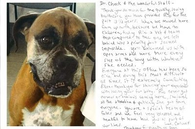 A thank you letter from a dog named Rio. Rio is a large tan and white boxer