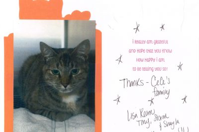 A thank you letter from a cat named CeCe
