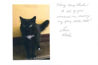 A thank you letter from a a cat named Noah